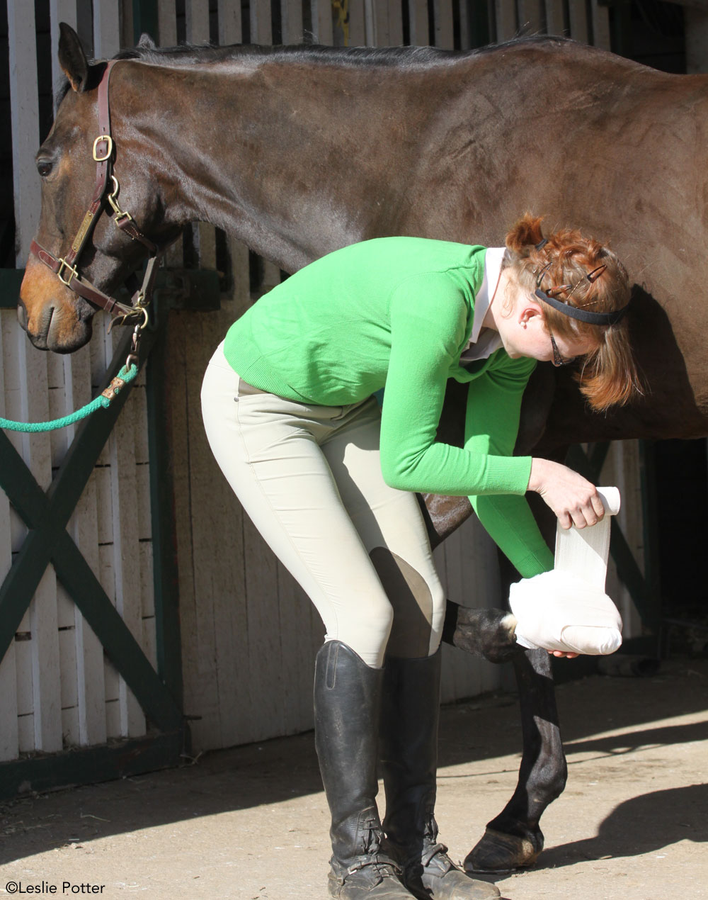 Wrapping a horse's hoof