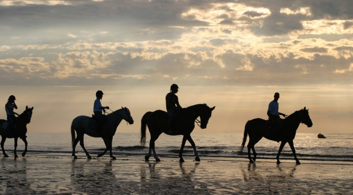 Group horseback riding on the beach