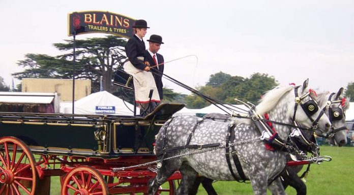 Pair of Percherons pulling a wagon