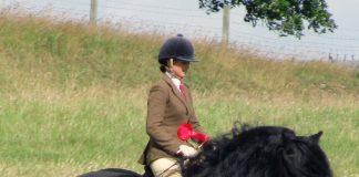 Dales Pony stallion being ridden