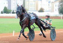 Standardbred horse harness racing