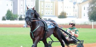 Standardbred horse harness racing