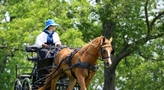 Woman driving a carriage pulled by a chestnut pony