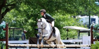 Gray hunter at a horse show