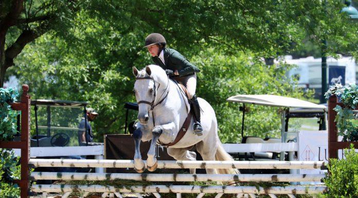 Gray hunter at a horse show