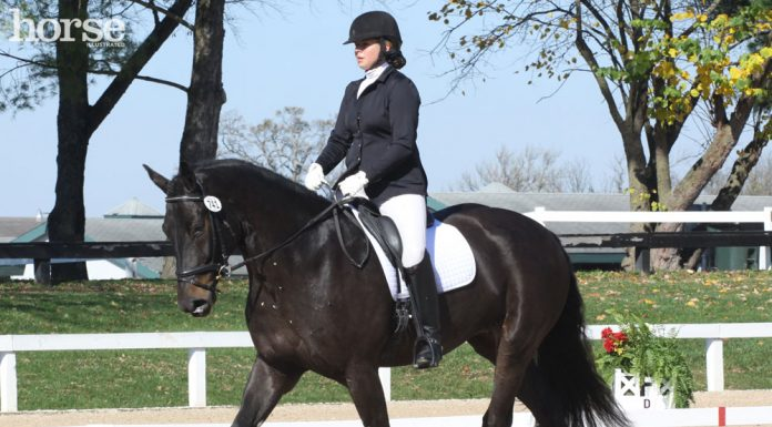Entering the dressage arena at a trot