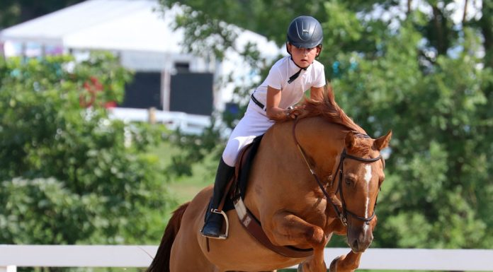 A rider competing in jumpers