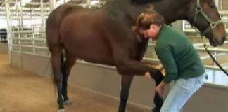 Basic horse stretches