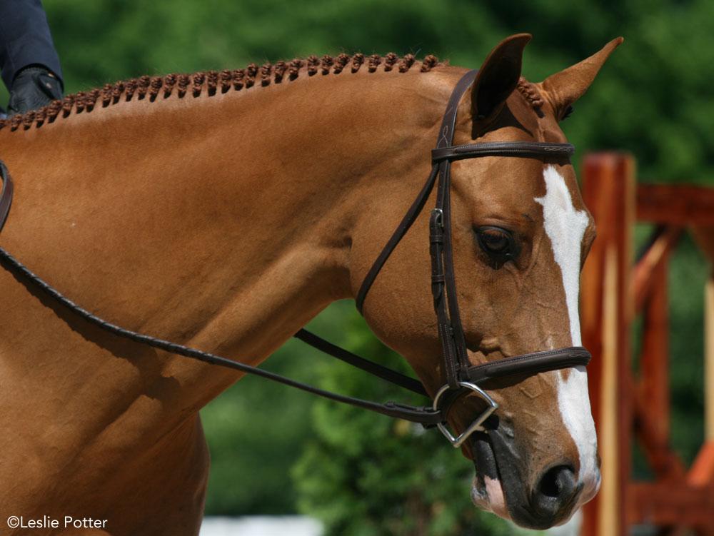 Horse wearing a snaffle bit