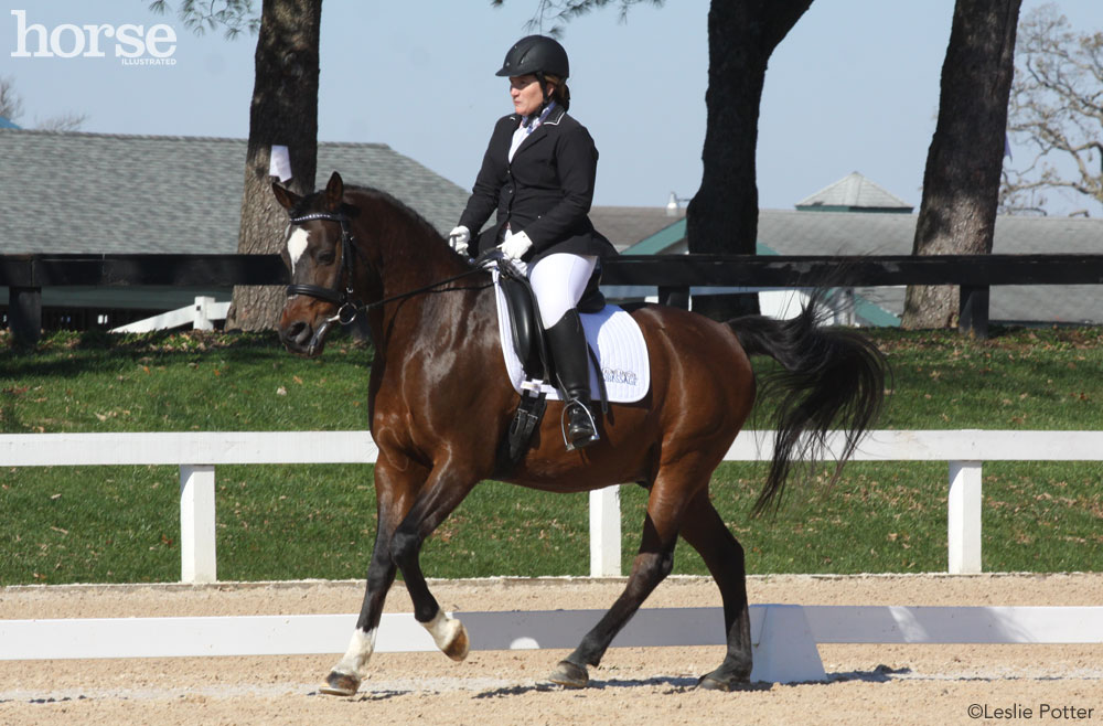Cantering dressage horse