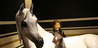 Arabian Horse Exhibit at the International Museum of the Horse