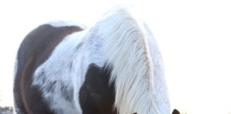 Horse with a red mineral block and white salt block