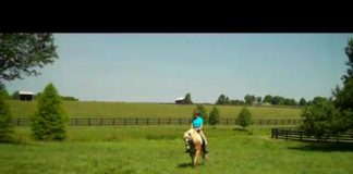 Haflinger video still