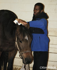 Volunteer Mikhail Proctor grooming a horse at the Kentucky Equine Humane Society