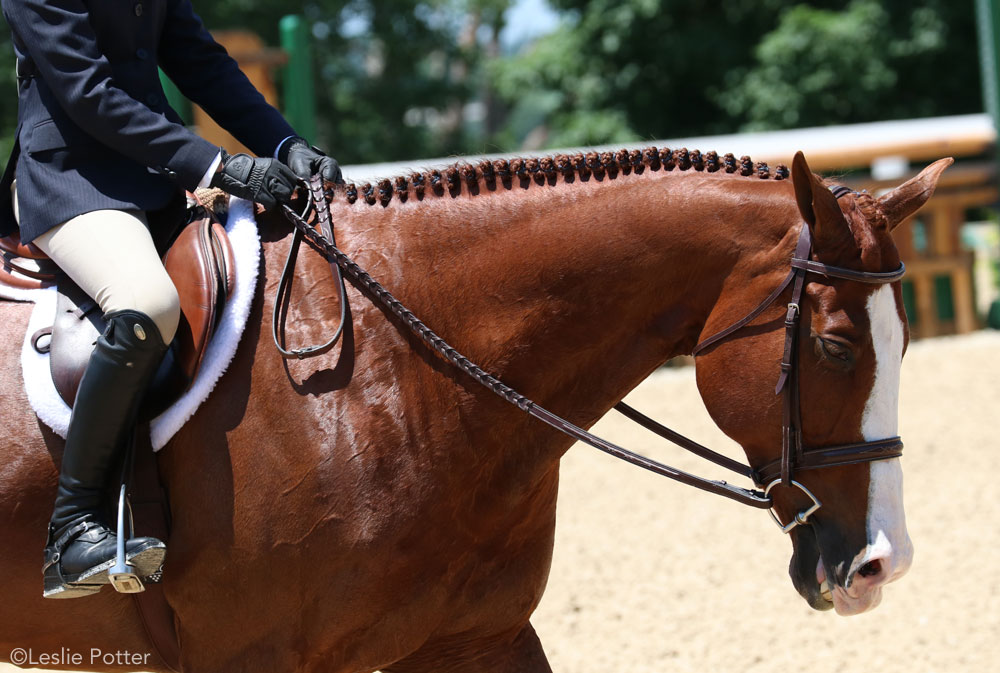 Hunter show horse