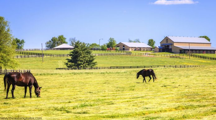 Horses in a field at a boarding stable