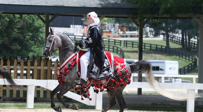 Horse and rider competing in an Arabian Native Costume Class