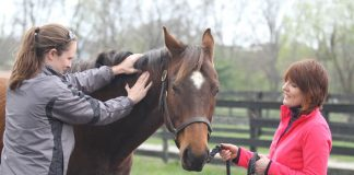 Equine massage therapist working on a horse