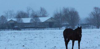 Horse farm in the winter