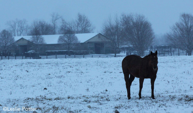 Horse farm in the winter