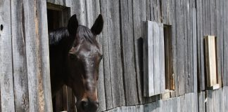 Horse on stall rest