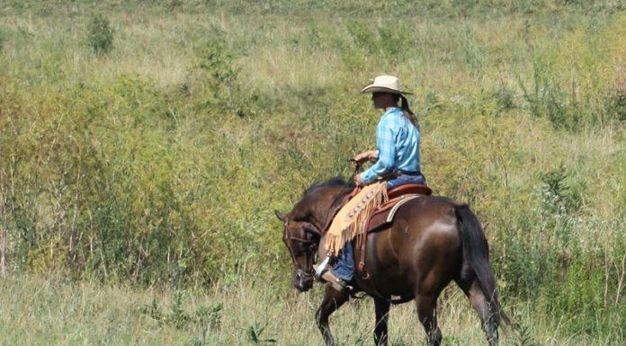 Western rider in an open field