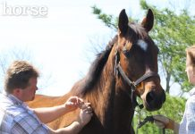 Equine vet administering a vaccination to a horse