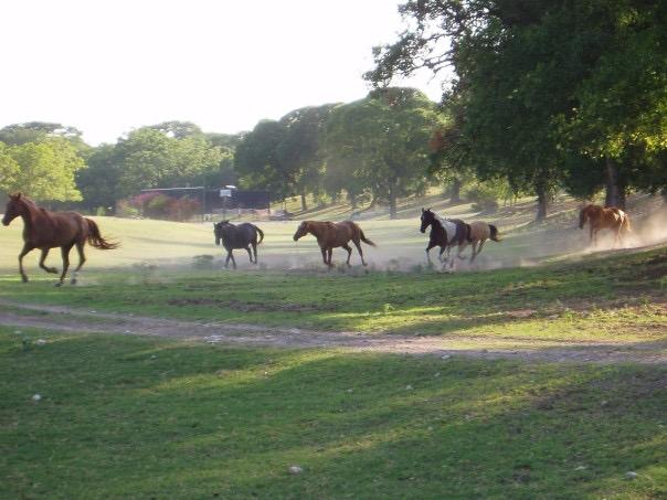 Summer camp horses