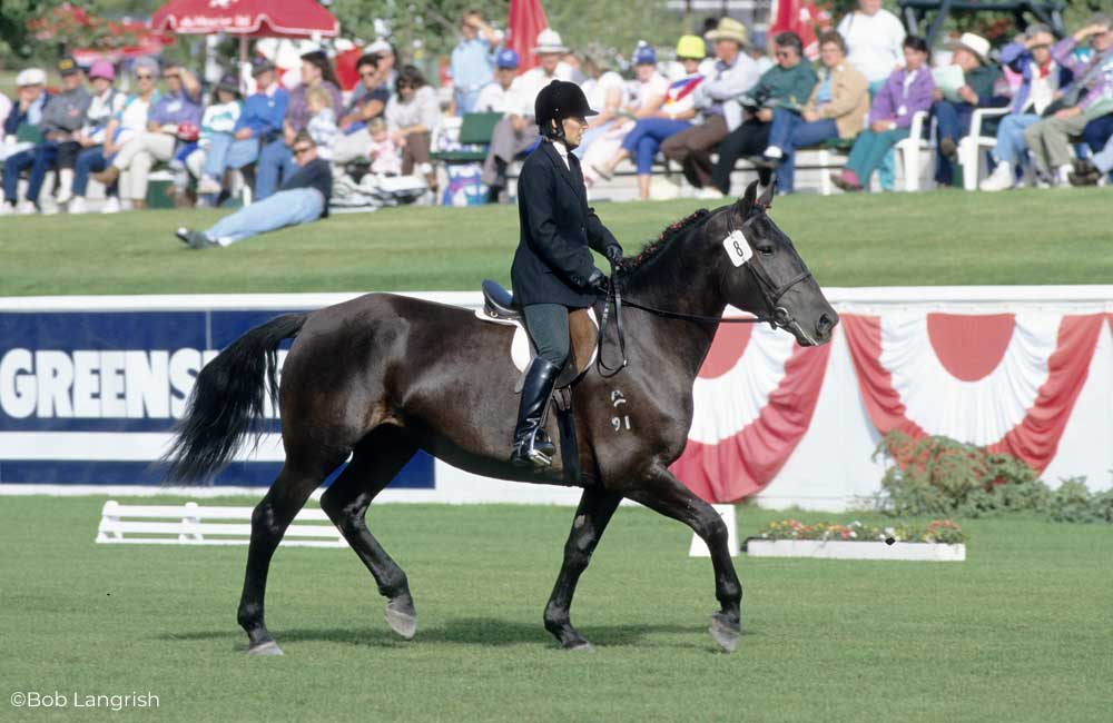 Rider on a Canadian Horse at a horse show