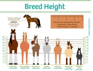 Horse Sizes