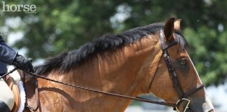 Headshot of a horse in a D-ring snaffle bit