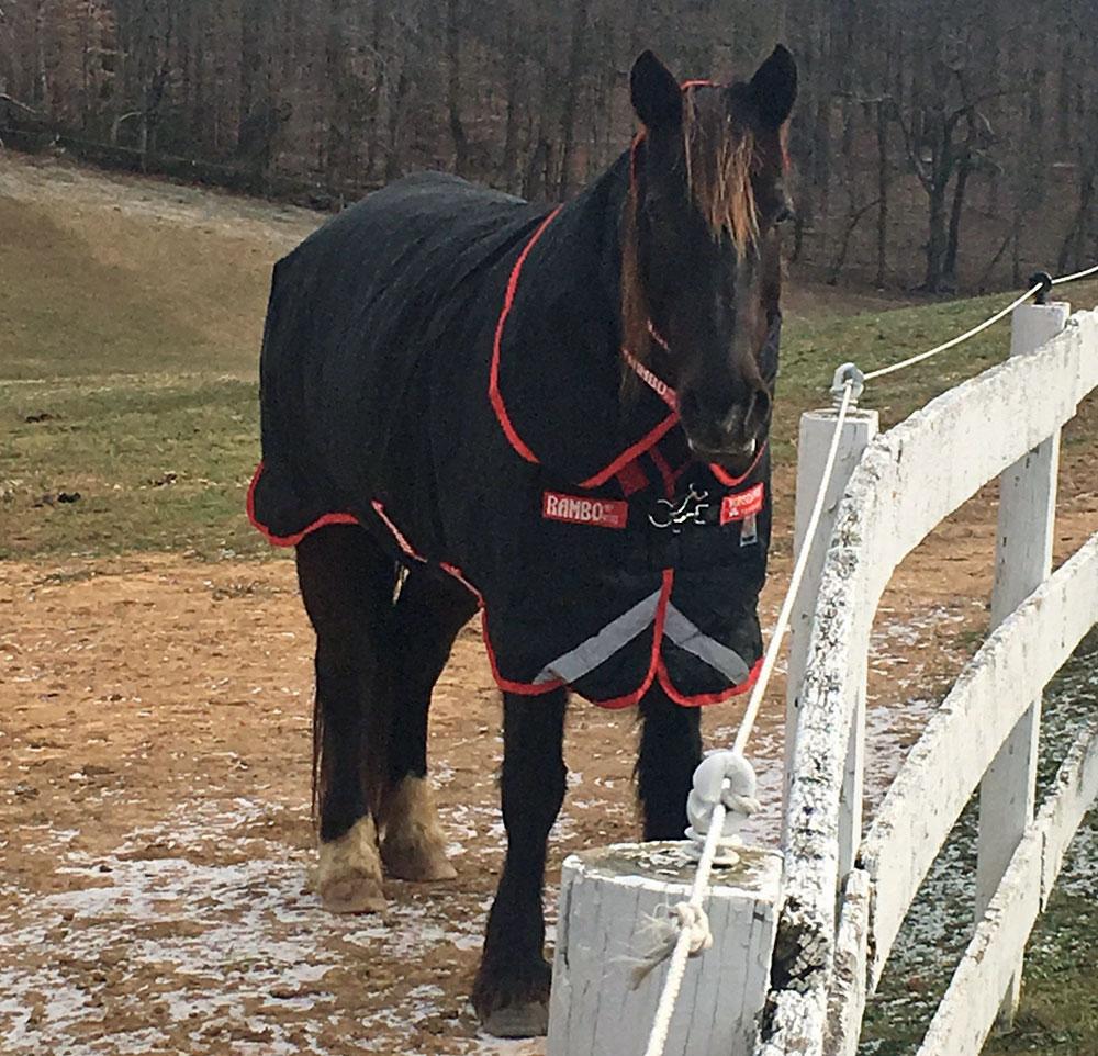 Horse in winter blanket