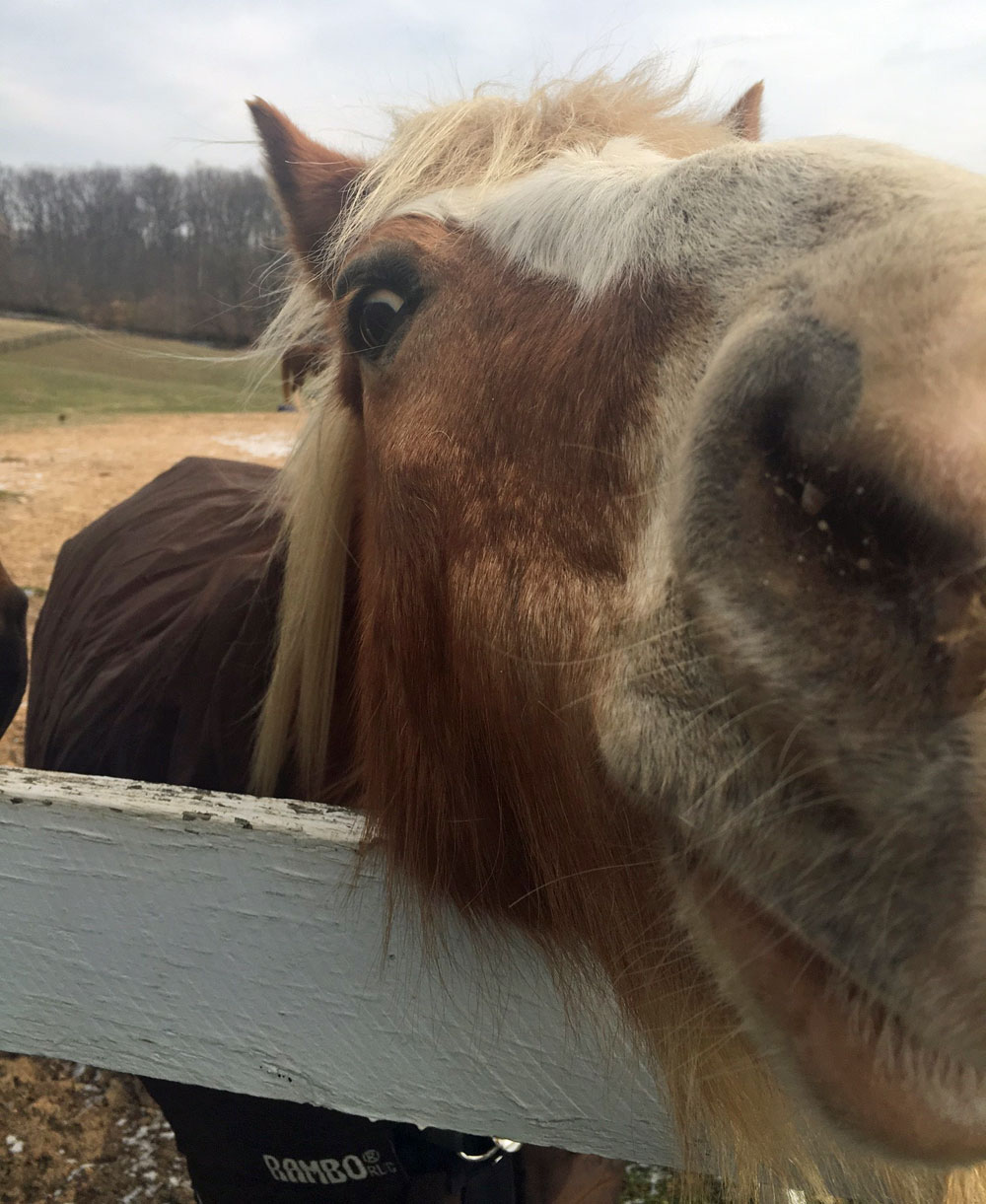 Horse nose up close