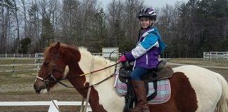 Jillian the Therapy Horse