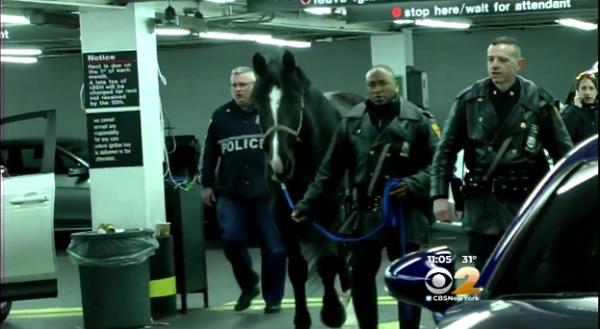 Police horse Gunny