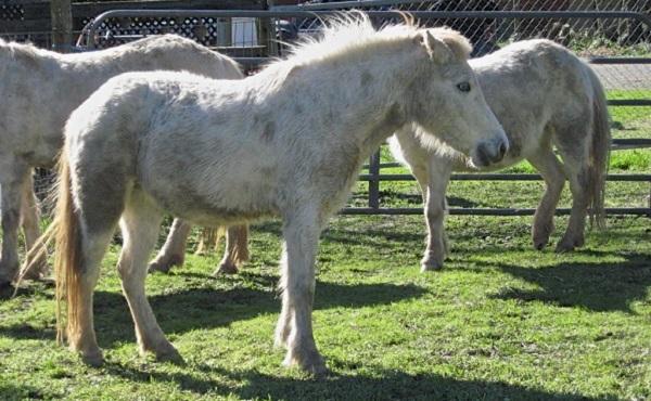 Ukiah Wild Ponies