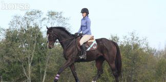 English horse and rider working at a trot