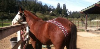 Kinesiology tape for horses