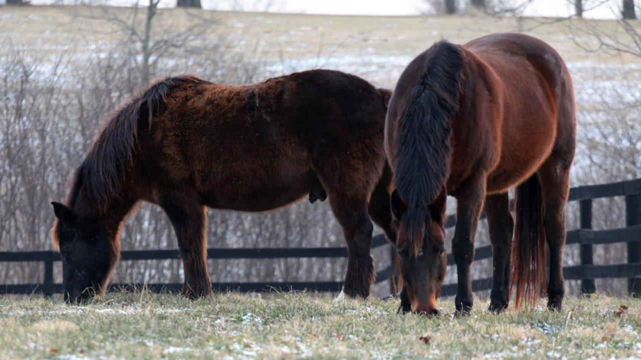 How Horses Grow Winter Coats Horse Illustrated