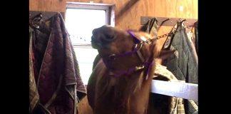 Houdini horse
