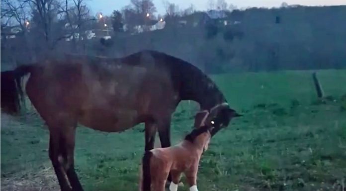 Real horse and fake horse in a video still