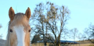 Paloma the horse at Duchess Sanctuary