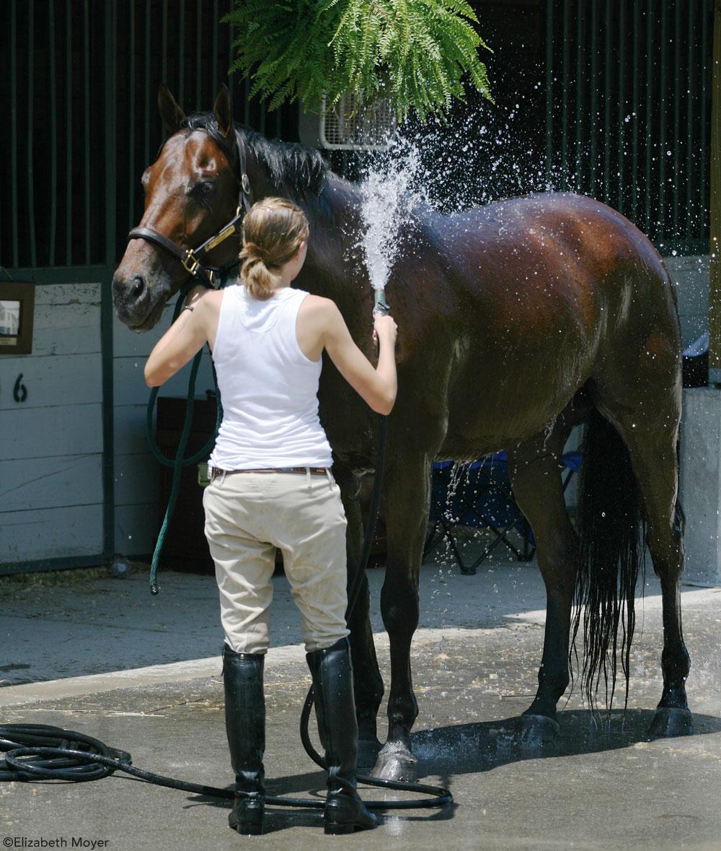 Hosing off a horse