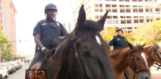 Slurpee the Baltimore Police Horse