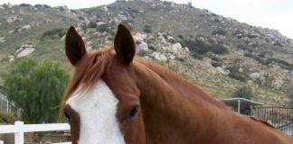 Paint Horse Wally