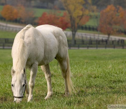 Horse grazing in the fall