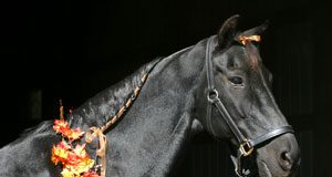 Poll Halloween Horse