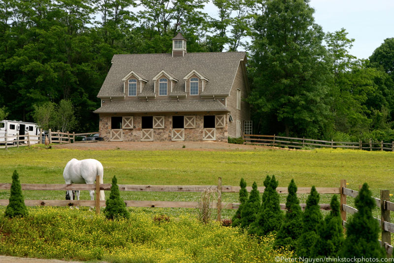 Horse grazing in a pasture in front of a small barn