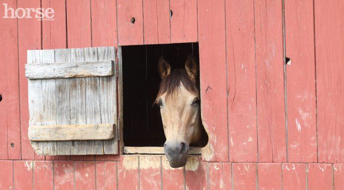 Buckskin Horse in a Barn