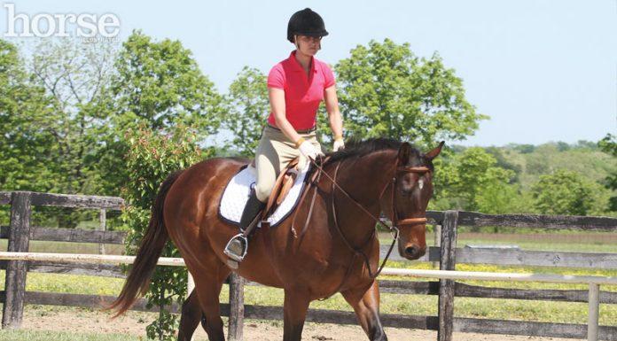 English horse and rider at a trot